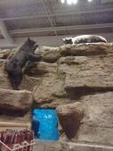 pets/animals (家畜/動物):熊
