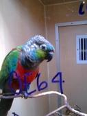 pets/animals (家畜/動物):鸚鵡