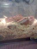 pets/animals (家畜/動物):蛇
