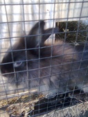 pets/animals (家畜/動物):兔子