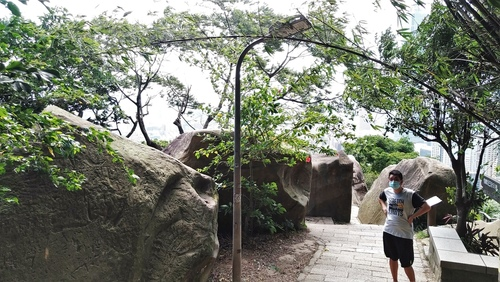 110.6.18.大安.九五峰 (138).jpg - 110.6.18.大安森林公園.九五峰