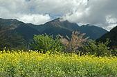 08 武陵&福壽山:DSC_2252.JPG