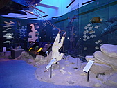2010杜拜員工團之二:杜拜博物館016.JPG