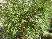 2011格拉納達之2_軒尼洛里菲夏宮:格拉納達軒尼洛里菲夏宮114.jpg