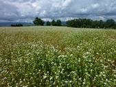 2011夏日繽紛北海道_美瑛富良野Flowerland:美瑛之丘05.jpg