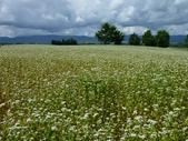2011夏日繽紛北海道_美瑛富良野Flowerland:美瑛之丘07.jpg