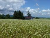 2011夏日繽紛北海道_美瑛富良野Flowerland:美瑛之丘10.jpg