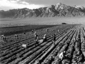 攝影大師:1280px-Ansel_Adams_-_Farm_workers_and_Mt._Williamson.jpg