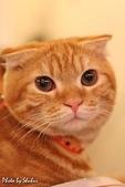 橘子貓:001橘子.jpg