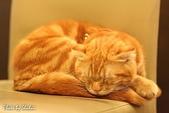 橘子貓:015橘子.jpg