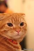 橘子貓:002橘子.jpg