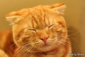 橘子貓:012橘子.jpg
