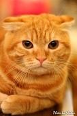 橘子貓:045橘子.jpg
