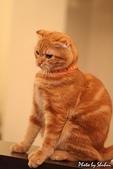 橘子貓:052橘子.jpg