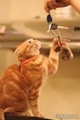 橘子貓:055橘子.jpg