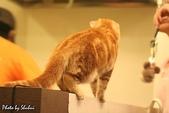 橘子貓:054橘子.jpg