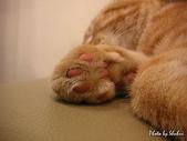 橘子貓:027橘子.jpg