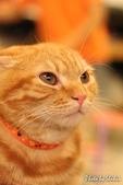 橘子貓:031橘子.jpg