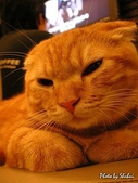 橘子貓:033橘子.jpg