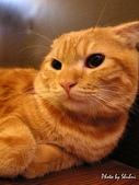 橘子貓:069橘子.jpg