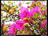 台南東興公園:IMG_0019