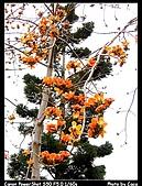台南東興公園:IMG_0035