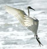 獵鳥篇210801(1):bird_CFJ8549.jpg