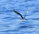 澳底打鳥20180722(2):b22_CFJ8138.jpg