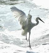 獵鳥篇210801(1):bird_CFJ8578.jpg