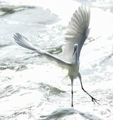 獵鳥篇210801(1):bird_CFJ8582.jpg