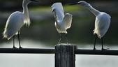 獵鳥篇210801(1):bird_CFJ8303.jpg