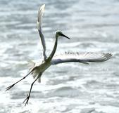 獵鳥篇210801(1):bird_CFJ8550.jpg