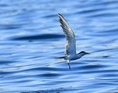 澳底打鳥20180722(2):b22_CFJ8142.jpg