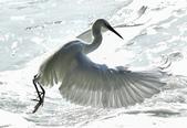 獵鳥篇210801(1):bird_CFJ8579.jpg