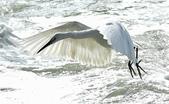 獵鳥篇210801(1):bird_CFJ8587.jpg