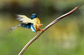 獵鳥篇210801(1):bird_CFJ8082.jpg