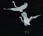 獵鳥篇210801(2):sh_CFJ7810.jpg