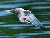 澳底打鳥20180728(3):d28_CFJ1690.jpg