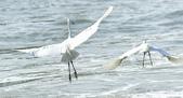獵鳥篇210801(1):bird_CFJ8556.jpg