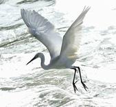 獵鳥篇210801(1):bird_CFJ8586.jpg