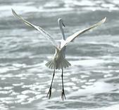 獵鳥篇210801(1):bird_CFJ8595.jpg