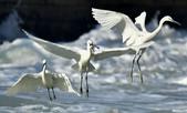 獵鳥篇210801(1):bird_CFJ8376.jpg
