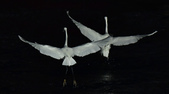 獵鳥篇210801(2):sh_CFJ7798.jpg