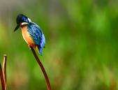 獵鳥篇210801(1):bird_CFJ8176.jpg