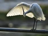 獵鳥篇210801(1):bird_CFJ8327 (7).jpg