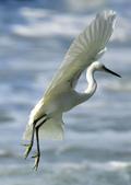 獵鳥篇210801(1):bird_CFJ8345.jpg