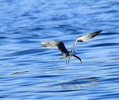 澳底打鳥20180722(2):b22_CFJ8136.jpg