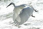 獵鳥篇210801(1):bird_CFJ8585.jpg