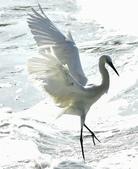 獵鳥篇210801(1):bird_CFJ8580.jpg