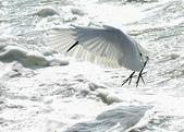 獵鳥篇210801(1):bird_CFJ8589.jpg